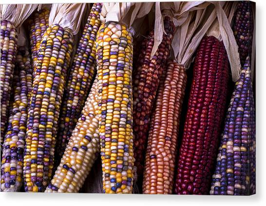 Indian Corn Canvas Print - Indian Corn by Garry Gay