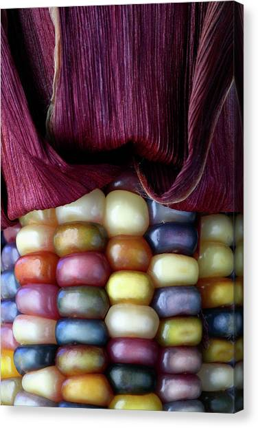 Indian Corn Canvas Print - Indian Corn by Michael Clutson/science Photo Library