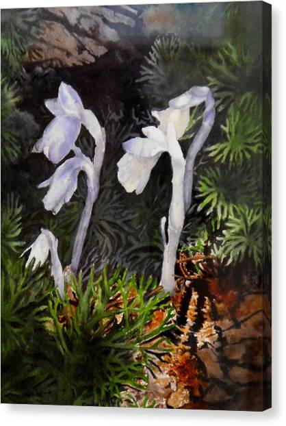 Indian Pipes Canvas Print by Enola McClincey