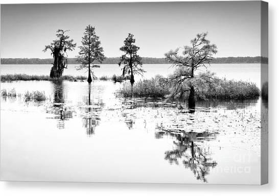 Great Cypress Canvas Print - Isle Of Peace - North Carolina by Dan Carmichael