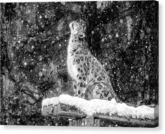 It's Snowing Canvas Print by David Williams