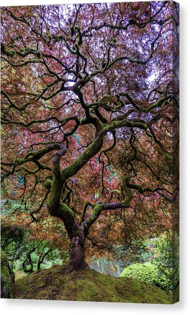 Japanese Gardens Canvas Print - Japanese Maple Tree by Mike Centioli