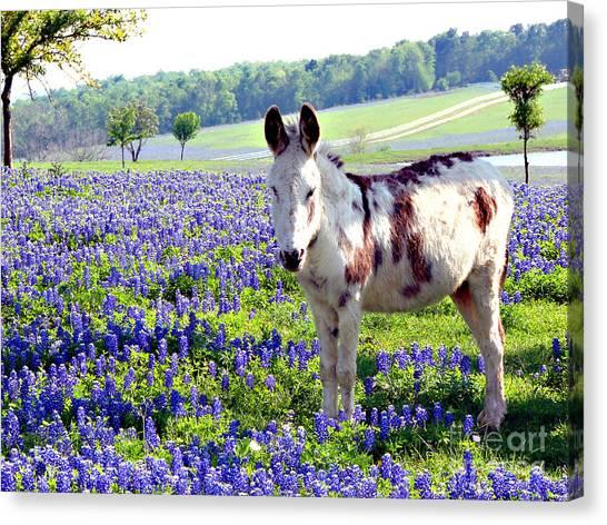 Jesus Donkey In Bluebonnets Canvas Print