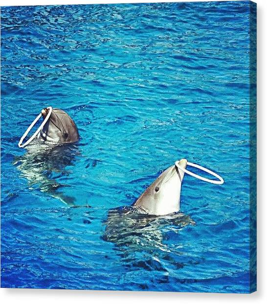 Dolphins Canvas Print - Jugglers by Gianluca Deplano