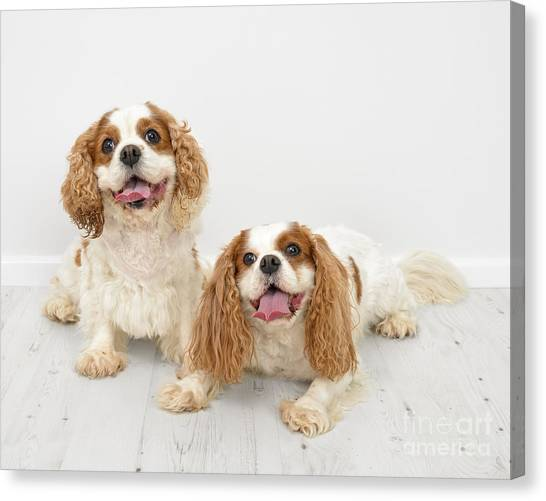 Wooden Floors Canvas Print - King Charles Spaniel Dogs by Amanda Elwell
