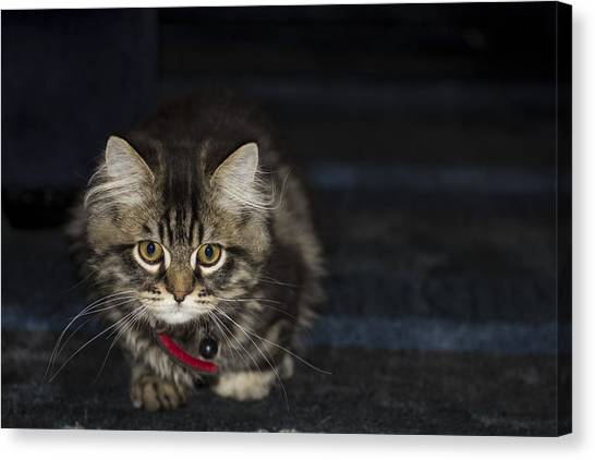 Kitty Canvas Print by Sanjeewa Marasinghe