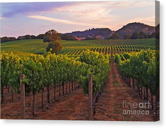 Knight's Valley Summer Solstice Canvas Print