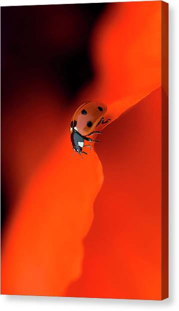 Ladybugs Canvas Print - Lady In Red by Jacky Parker
