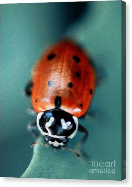 Spring Canvas Print - Ladybug On Green Leaf by Iris Richardson