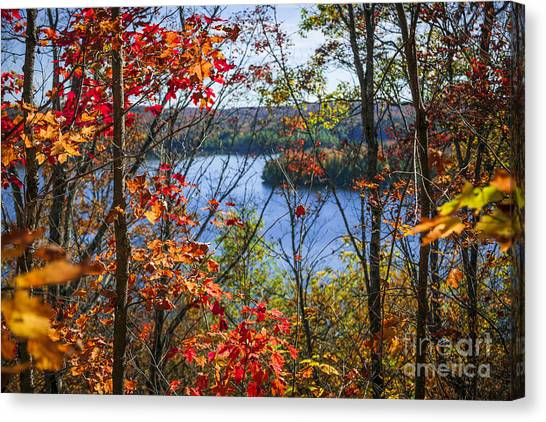 Canadian Landscape Canvas Print - Lake And Fall Forest by Elena Elisseeva