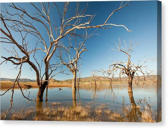 Climate Change Canvas Print - Lake Eildon In Drought by Ashley Cooper