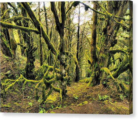 Mossy Forest Canvas Print - Laurel Forest by Karol Kozlowski