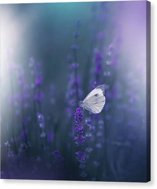 Lavender Queen... Canvas Print by Juliana Nan