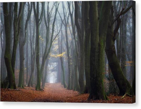 Foggy Forests Canvas Print - Lean On Me by Ellen Borggreve