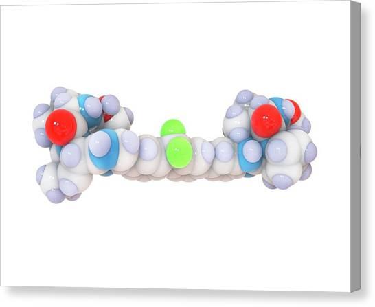 Ledipasvir Hepatitis Drug Molecule Canvas Print by Ramon Andrade 3dciencia