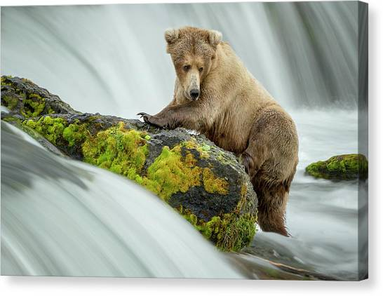 Brown Bears Canvas Print - Left Wanting by Renee Doyle