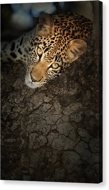 Close-up Canvas Print - Leopard Portrait by Johan Swanepoel