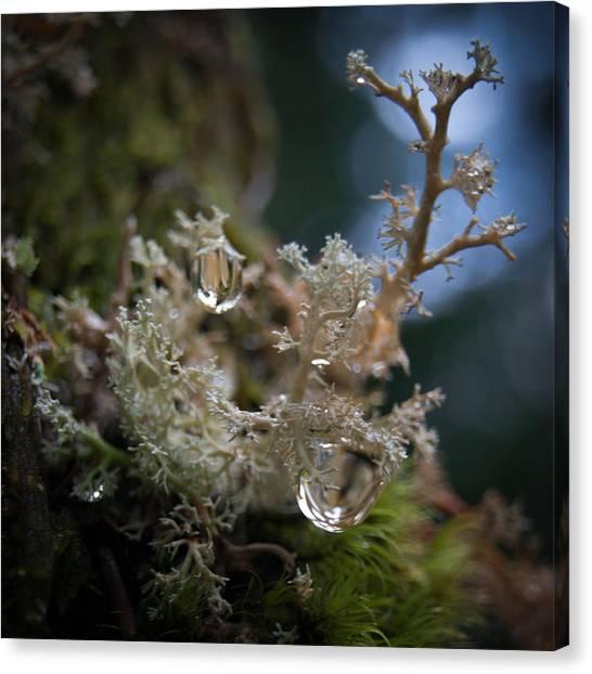 Lichen World Pour  Canvas Print