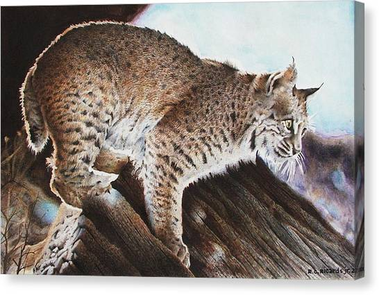Linns Valley Bobcat Canvas Print by Ric Ricards