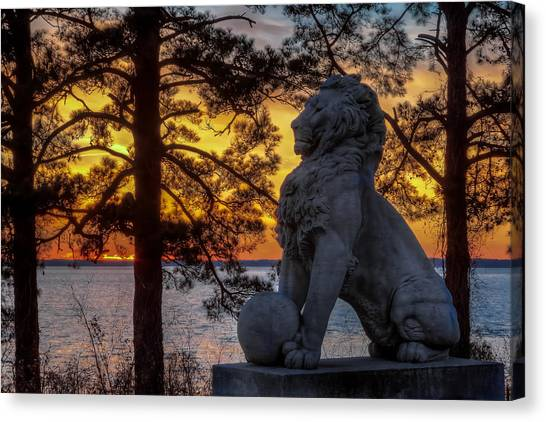 Lion At Sunset Canvas Print