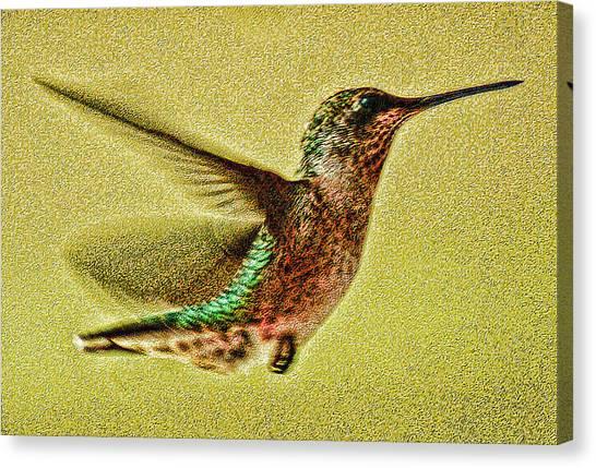 Little Wings Canvas Print by Joe Bledsoe