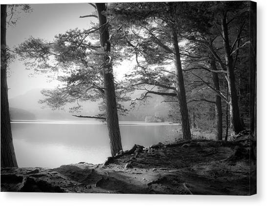Pine Trees Canvas Print - Loch An Eilein by Dorit Fuhg