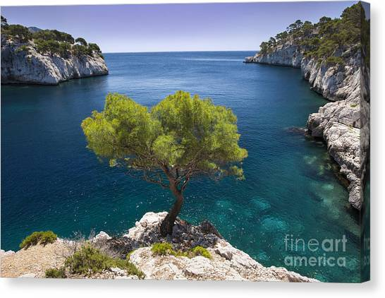 Lone Pine Tree Canvas Print
