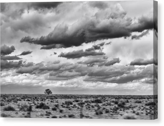 Lonesome Tree Bw Canvas Print by Alan Tonnesen
