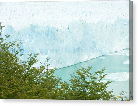 Perito Moreno Glacier Canvas Print - Looking At The Perito Moreno Glacier by Tom Bol