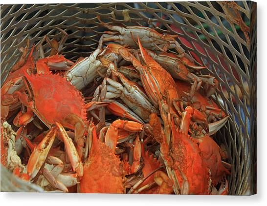 Louisiana Boiled Crabs Canvas Print