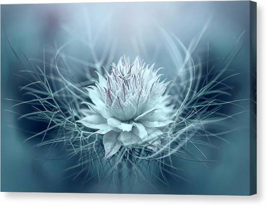 Love-in-a-mist Canvas Print by Jacky Parker