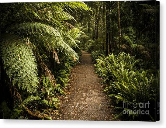 Forest Paths Canvas Print - Lush Green Tasmanian Forest Trail In Strahan by Jorgo Photography - Wall Art Gallery