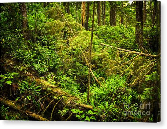 Mossy Forest Canvas Print - Lush Temperate Rainforest by Elena Elisseeva