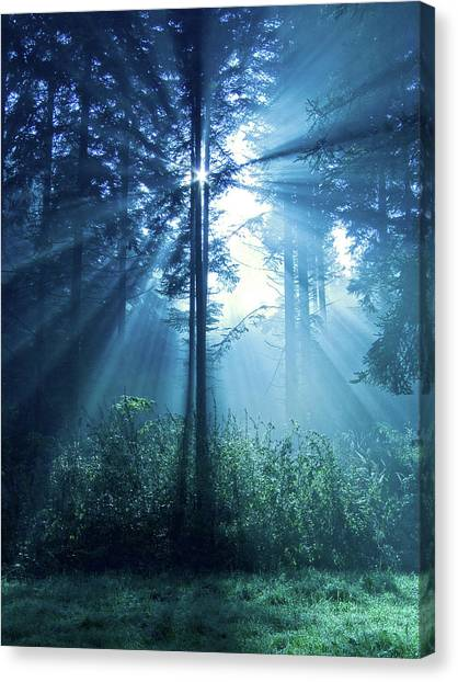 Forest Canvas Print - Magical Light by Daniel Csoka