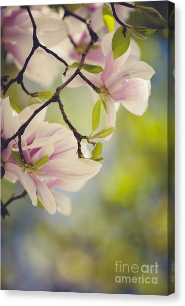 Bush Canvas Print - Magnolia Flowers by Nailia Schwarz