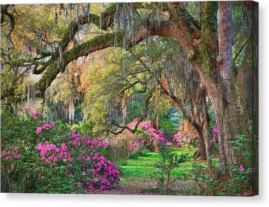 Magnolia Plantation Azaleas Canvas Print
