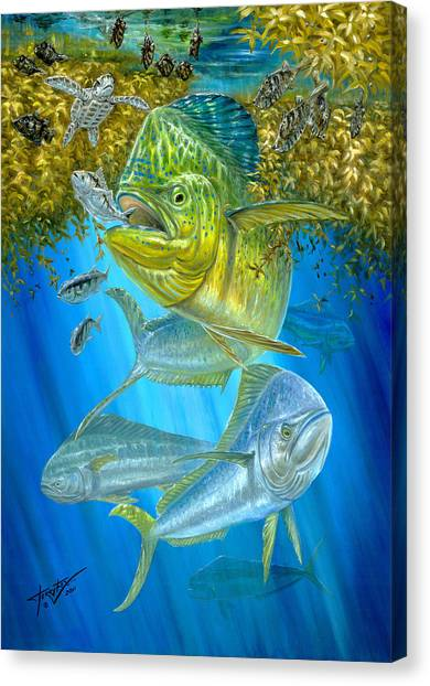 Mahi Mahi Hunting In Sargassum Canvas Print