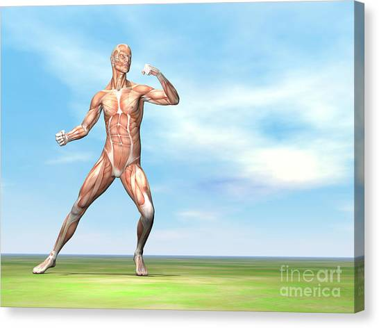 Jujitsu Canvas Print - Male Musculature In Fighting Stance by Elena Duvernay