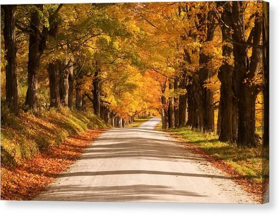 Maple Tree Canopy Canvas Print