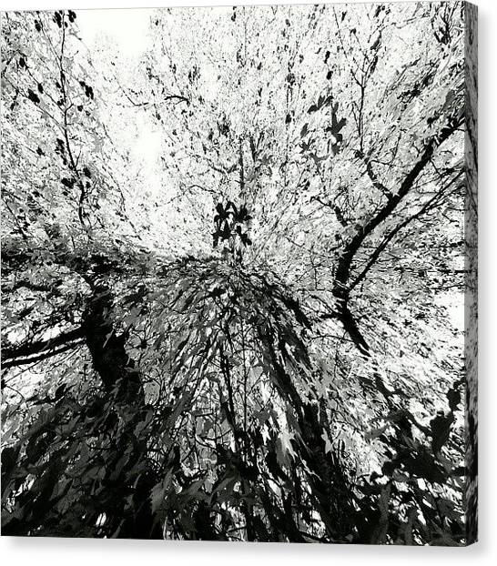 White Canvas Print - Maple Tree Inkblot by CML Brown