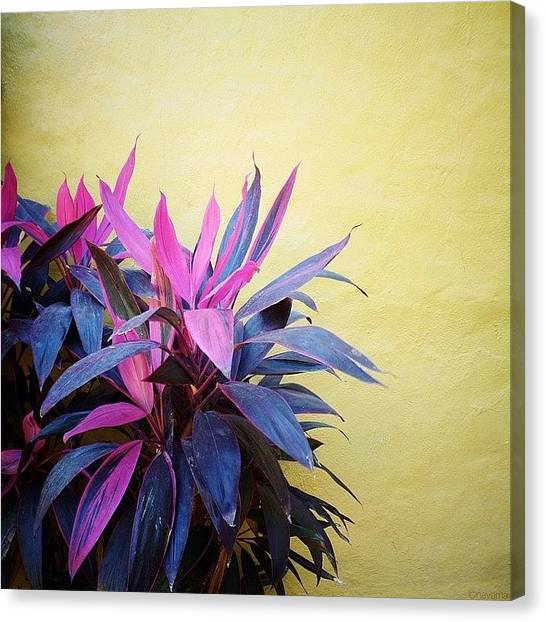 Minimalism Canvas Print - Mexico by Natasha Marco
