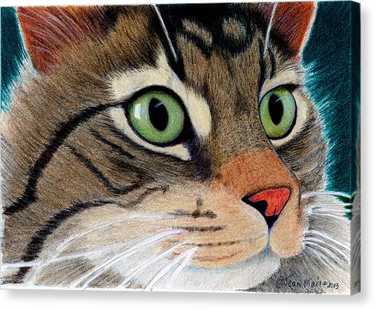 Main Coons Canvas Print - Miles  by Jean Marie Economen