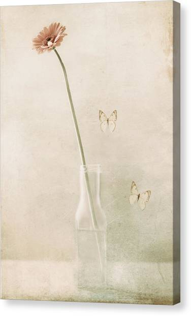 Bug Canvas Print - Miss Daisy by Delphine Devos