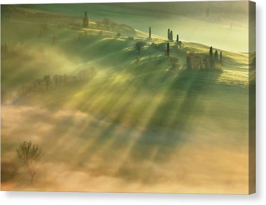 Cypress Canvas Print - Mist... by Krzysztof Browko