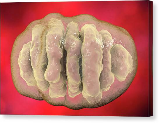 3d Visualization Canvas Print - Mitochondrion by Kateryna Kon/science Photo Library