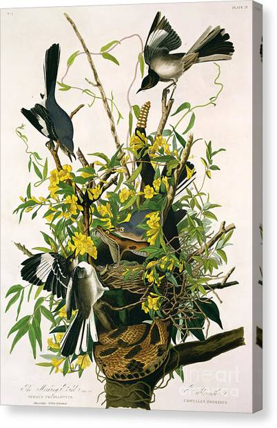 Rattlesnakes Canvas Print - Mocking Birds And Rattlesnake by John James Audubon