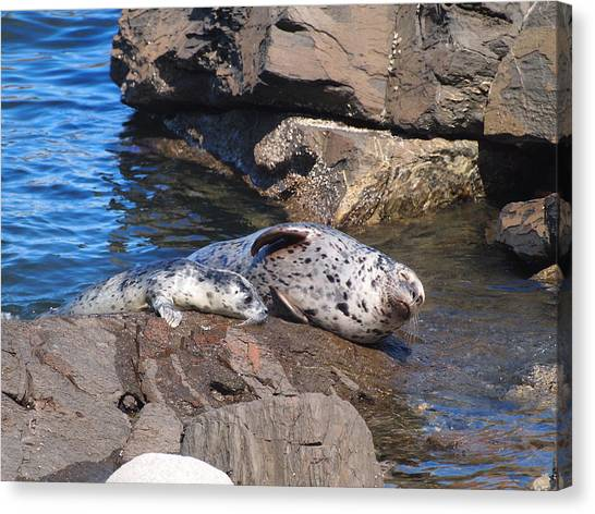 Mom And Baby Seal Canvas Print by Frieda Cron