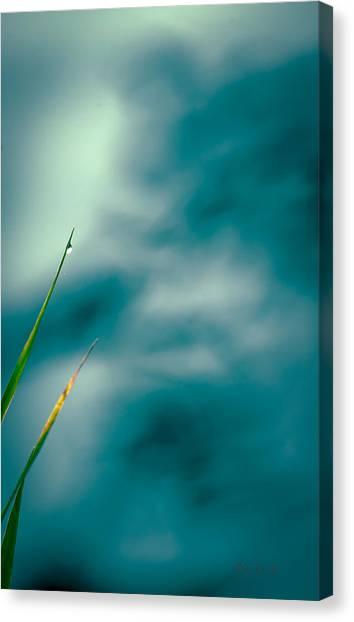 Impressionistic Canvas Print - Morning Dew  by Bob Orsillo
