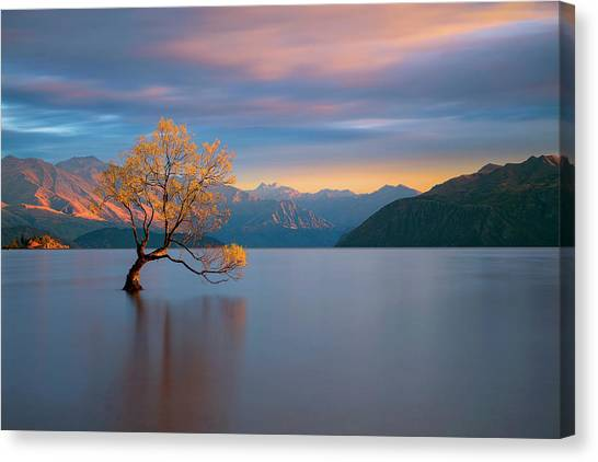 Early Canvas Print - Morning Glow by Renee Doyle