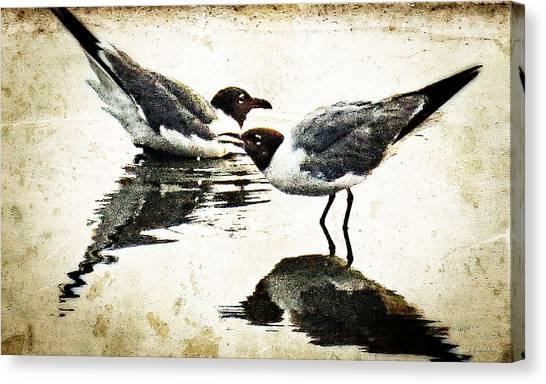 Morning Gulls Seagull Art By Sharon Cummings Canvas Print by William Patrick